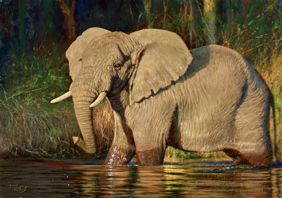 Elephant on Zambian River by Tony Forrest -  sized 23x17 inches. Available from Whitewall Galleries